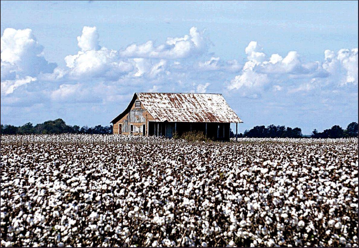 Farmers facing a perfect storm - Arkansas Democrat-Gazette