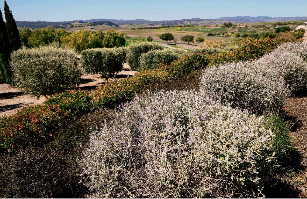 Designing a landscape worthy of an amazing view - San Luis Obispo ...